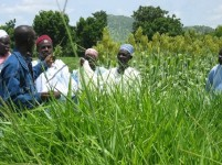Groupe_devant_panicum_2012_480x360_th_455
